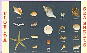 Florida Sea Shells p22050 (Image1)
