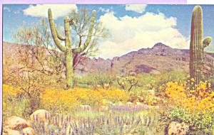 Cactus Valley of the Sun  Arizona p22195 (Image1)