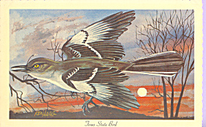 Texas State Bird Mockingbird (Image1)
