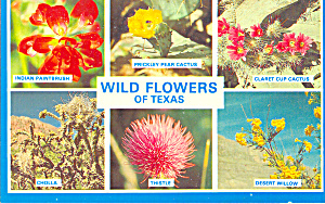Texas Wild Flowers (Image1)