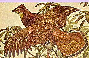 Ruffed Grouse Pennsylvania State Bird p22696 (Image1)