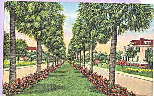 Victory Drive Savannah Georgia Postcard p22983 (Image1)