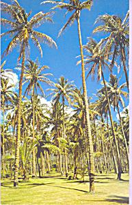 Coconut Grove Near Wailua River Hawaii p23342 (Image1)