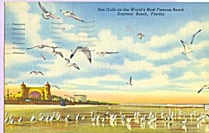 Sea Gulls  on Daytona Beach Florida p23352 (Image1)