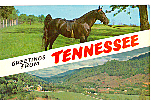 The Tennessee Walking Horse p23467 (Image1)