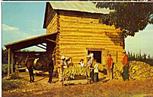 Stringing Tobacco at Harvest Time Postcard p23507 (Image1)