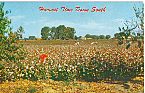 Harvest Time Down South Postcard p23528 (Image1)