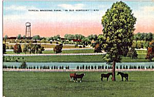 Breeding Farm Kentucky Postcard p23870 (Image1)