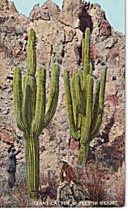 Giant Cactus (Image1)