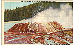 Sponge Geyser  Yellowstone National Park WY p24214 (Image1)