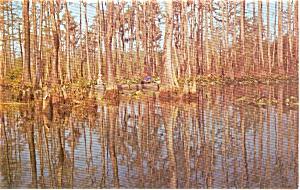 Waycross GA Okefenokee Swamp Park Postcard p2430 (Image1)