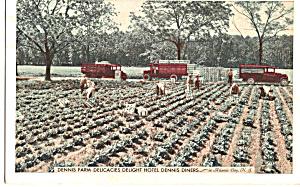 Dennis Farms Delicacies Vintage Trucks Postcard p24310 (Image1)