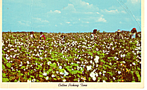 Cotton Picking Time Postcard p24316 (Image1)
