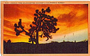 Joshua Tree in a California Sunset p24493 (Image1)