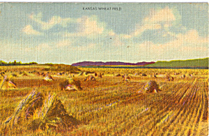 Kansas Wheat Fields Postcard p24514 (Image1)