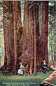 Cathedral Group Big Tree Grove CA p24697 (Image1)