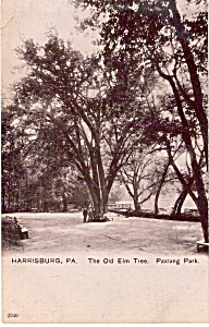 Paxtang Park, Harrisburg,Pennsylvania, the Old Elm Tree (Image1)