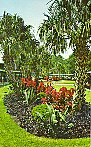 Tropical Planting ,Administration Bldg Silver Springs (Image1)