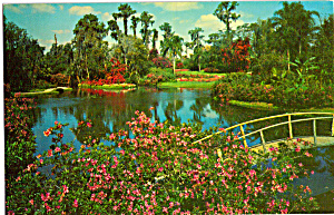 Tropical Blossoms Cypress Gardens Florida P24839