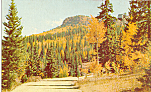 Golden Aspen Trees in The Rocky Mountains Postcard p24979 (Image1)