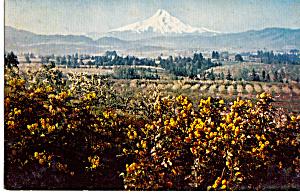 Mt Hood and Hood River Valley Oregon p24987 (Image1)