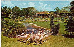 Flamingo Parade  Parrot Jungle Florida p25038 (Image1)