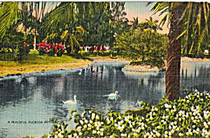 A Peaceful Florida Retreat Postcard p25140 (Image1)