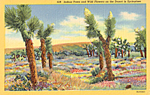 Joshua Trees and Wildflowers (Image1)