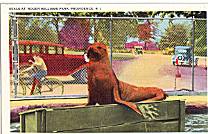 Seals at, Roger Williams Park, Providence (Image1)