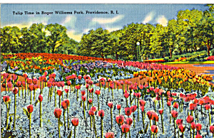 Tulip Time, Roger Williams Park, Providence (Image1)