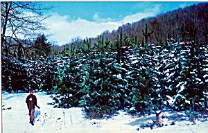 Hunter at Edge of Pine Plantation p25828 (Image1)