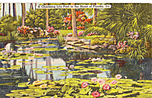 A Charming Lily Pool In The Heart Of Florida P25881