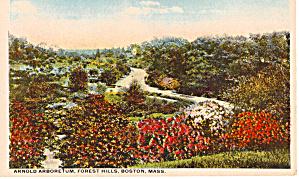 Arnold Arboretum Forest Hills Boston MA p26251 (Image1)
