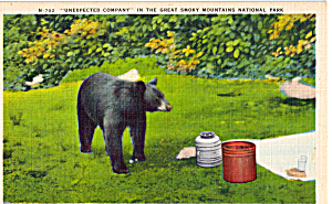 Unexpected Company Black Bear Postcard P26346