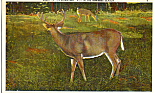 Deer Early in the Morning Postcard p26350P (Image1)