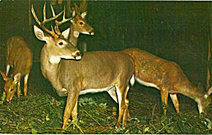 Deer Herd (Image1)