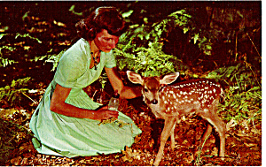 Girl with Fawn Postcard p26356 (Image1)