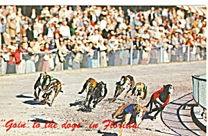 Goin to the Dogs in Florida (Image1)