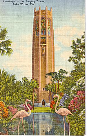 Flamingos at The Singing Tower Lake Wales p26660 (Image1)