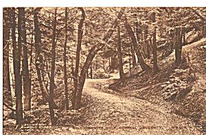 Goldwin Smith Walk Cornell University Ithaca New York p26668 (Image1)