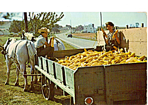 Amish Boys with a Farm Wagon Full of Corn p26733 (Image1)
