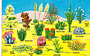 Various Species Of Cactus Of The Southwestern Desert P26919