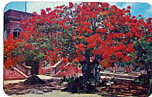 Luxuriant Vegetation Virgin Island Scene p27102 (Image1)