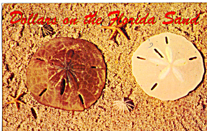 Florida Sand Dollar Postcard p27287 (Image1)