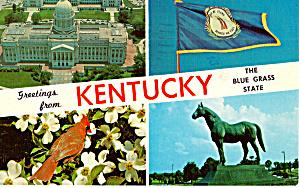 Kentucky State Bird Cardinal p27871 (Image1)