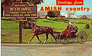 Traditional Amish Horse and Buggy (Image1)