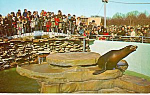 Harbor Seals Aquarama Theatre of The Sea Philadelphia PA  p27963 (Image1)