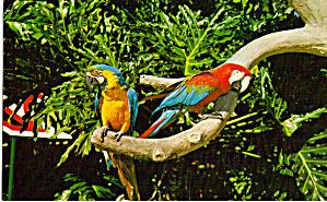 Parrots, Busch Gardens, Tampa, Florida (Image1)
