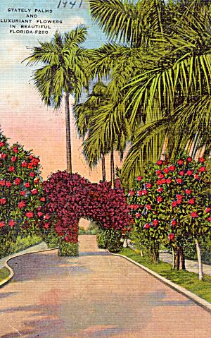 Stately Palms Florida p28122 (Image1)