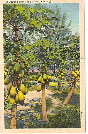 Papaya Grove Florida p28123 (Image1)